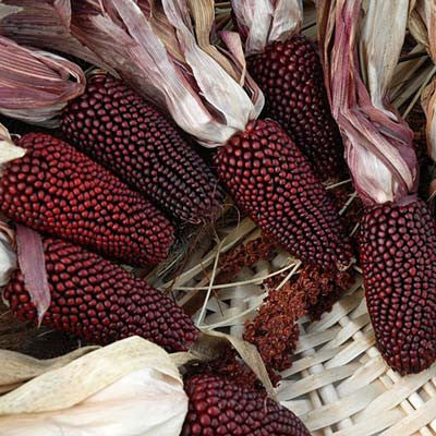 Ornamental Corn Cherry Berry Seeds