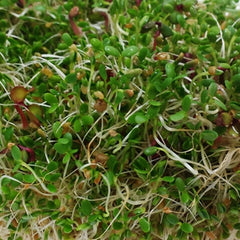 Spicy Mix Sprouts Organic Seeds