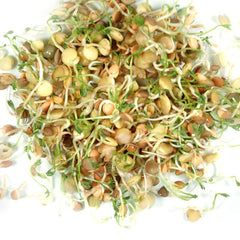 Crispy Mix Sprouts Organic Seeds