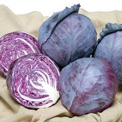 Cabbage Ruby Ball Improved F1