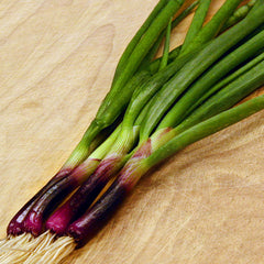 Onion Red Baron Organic