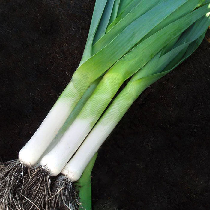 Leek Striker F1