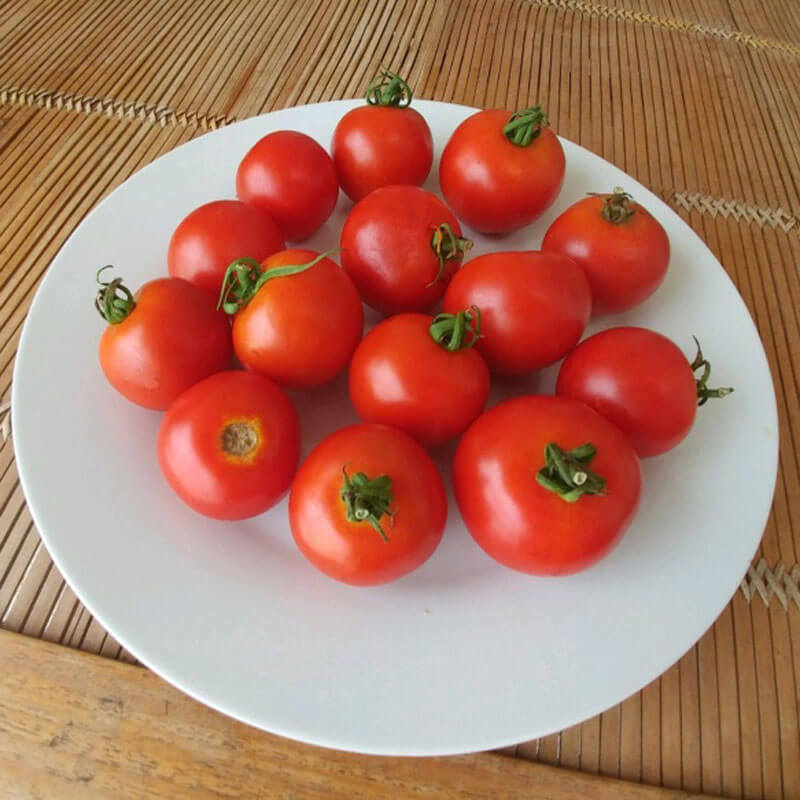 Tomato Red Racer F1 Seeds