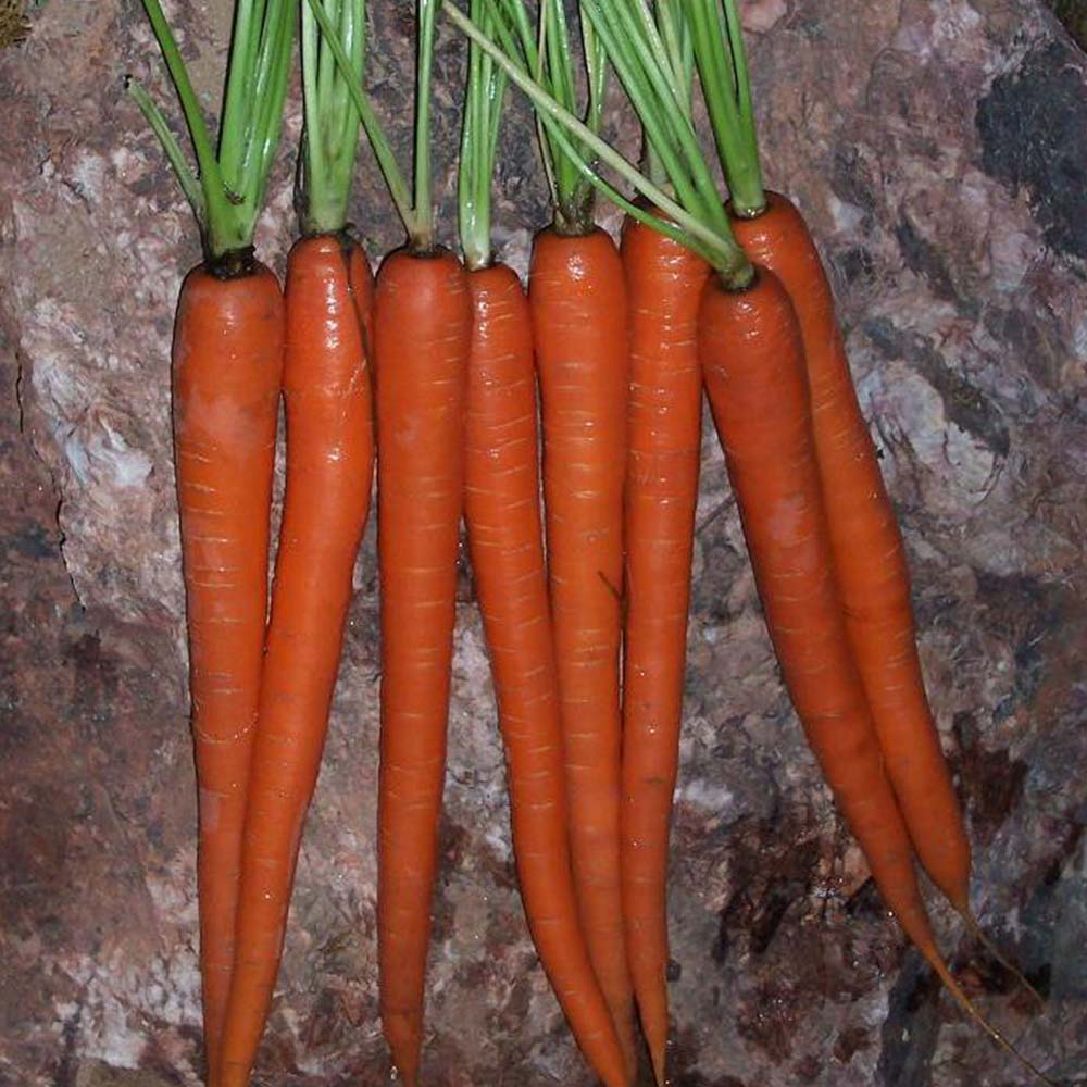 Carrot Interceptor F1 Organic
