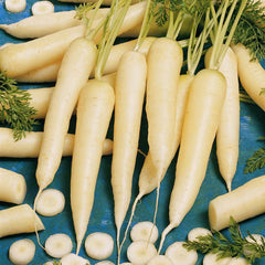 Carrot White Satin F1 Organic