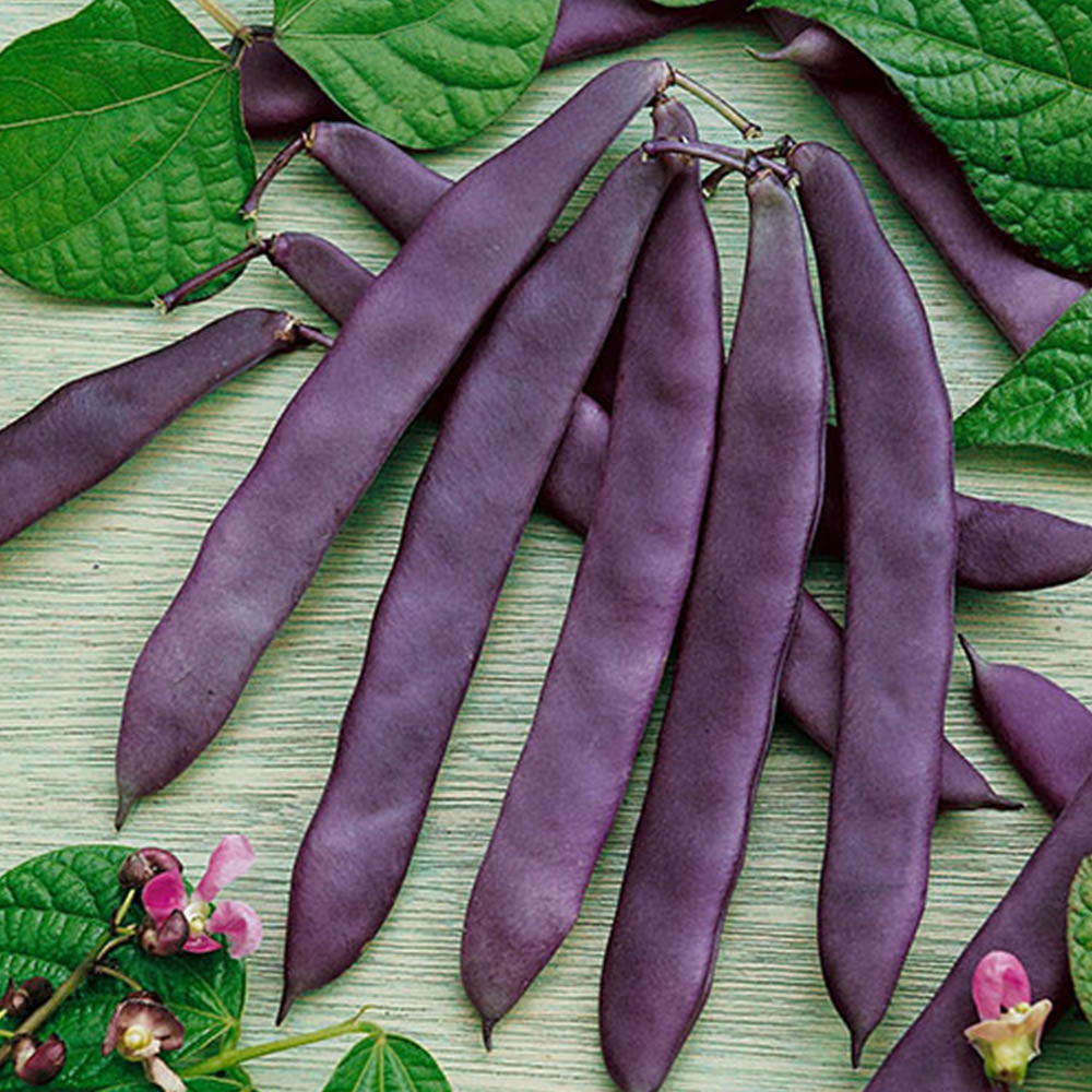 Bean Purple Pod Organic
