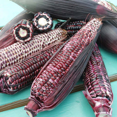 Sweet Corn Double Red Organic