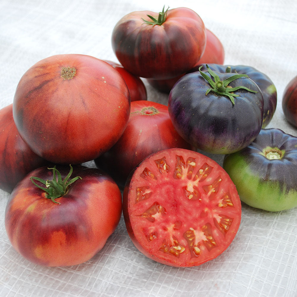 Tomato Indigo™ Blue Beauty Organic
