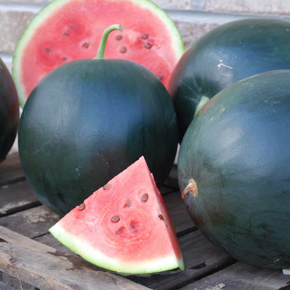 Watermelon Black Tail Mountain Organic