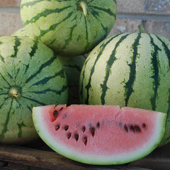 Watermelon Chris Cross Organic