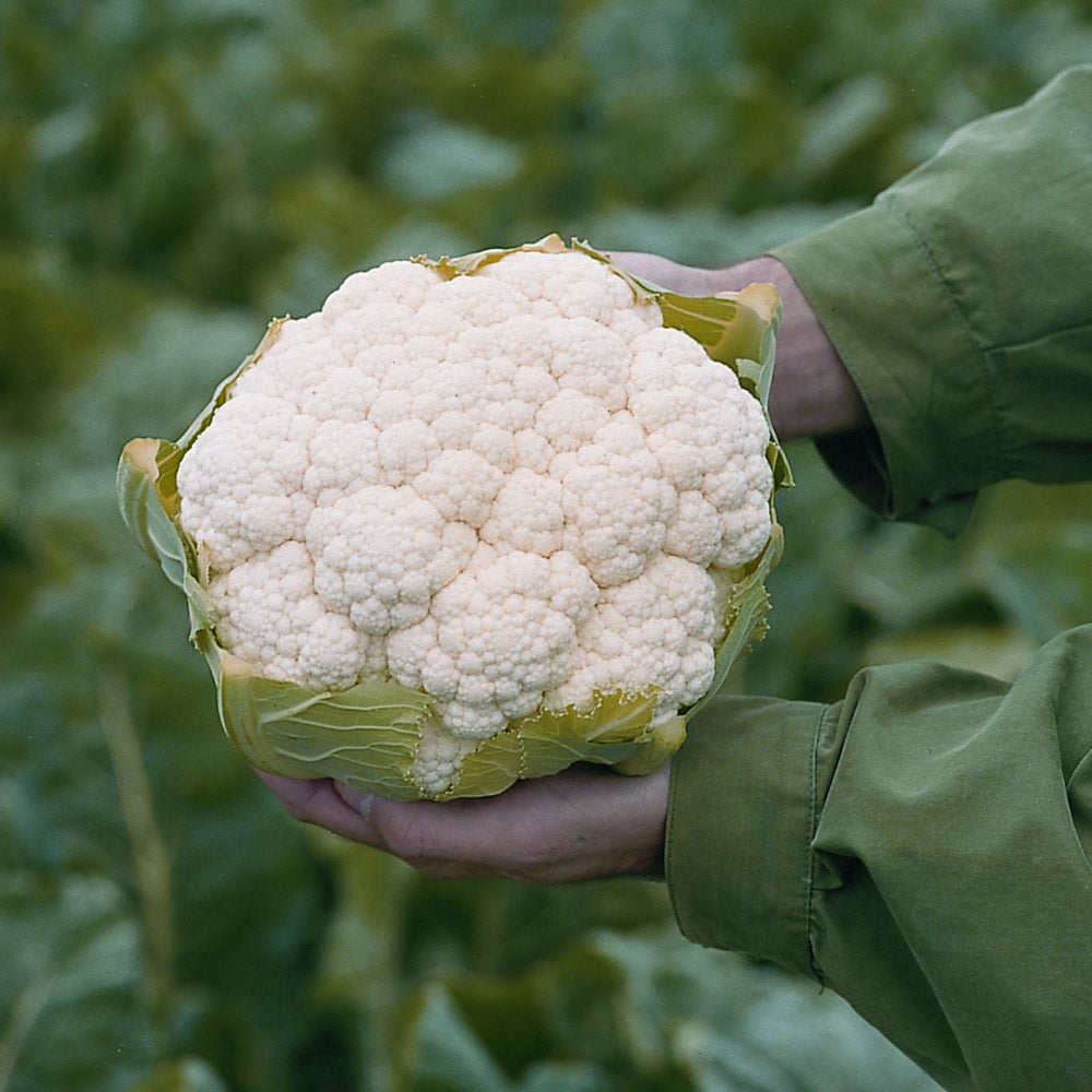 Cauliflower Flamenco F1