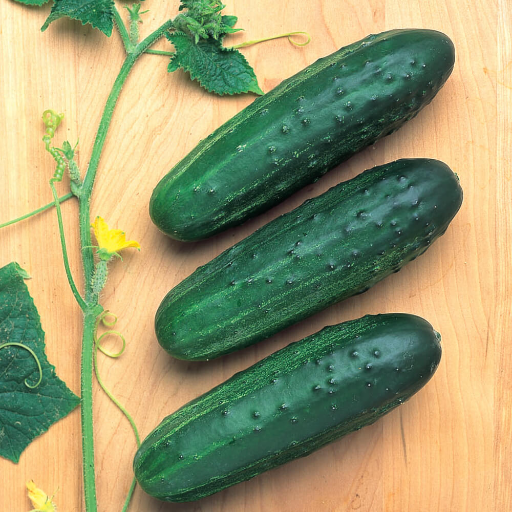 Cucumber Cross Country F1