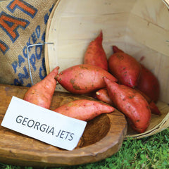 Sweet Potato Georgia Jet