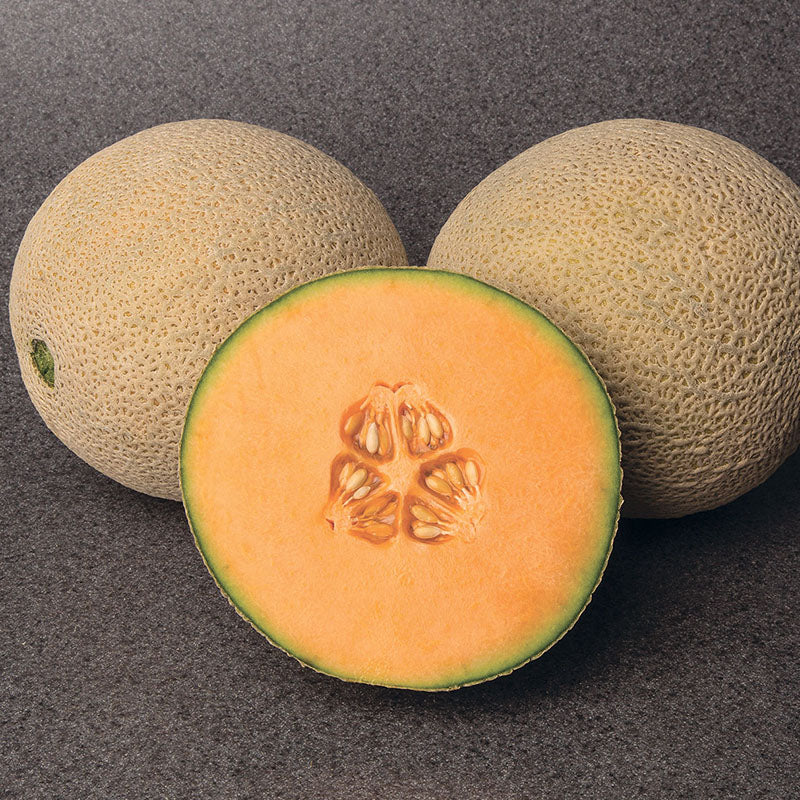 Melon Gold Crown F1