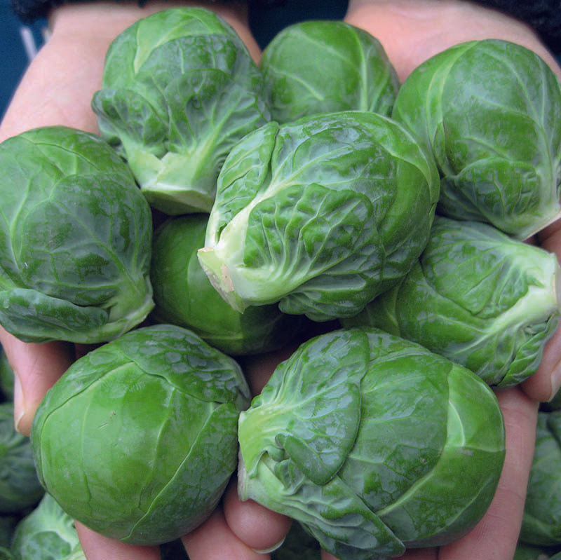 Brussels Sprouts Marte F1