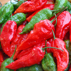 Pepper Ghost Pepper Red