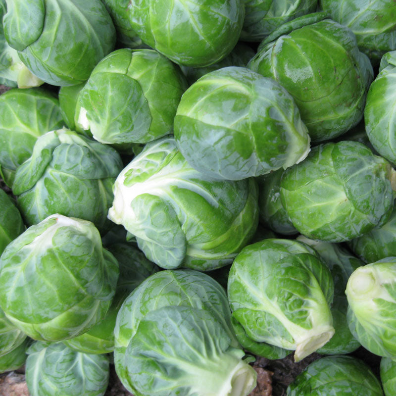 Brussels Sprouts Dagan