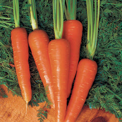 Carrot Moonraker F1