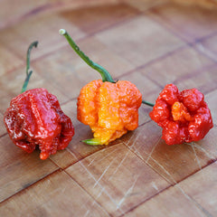Pepper Carolina Reaper