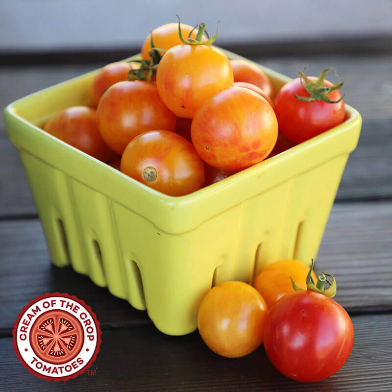 Tomato Tropical Sunset Organic Seeds