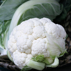 Cauliflower Twister F1