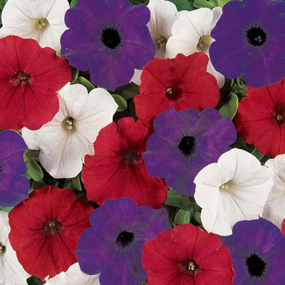 Petunia Easy Wave Flag Mix F1
