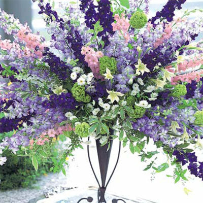 Larkspur Cannes Mix