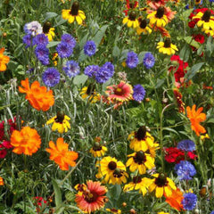 Wildflower Southeast Mix