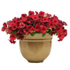 Petunia Easy Wave Velour Berry F1
