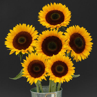 Sunflower Sunrich Orange DMR F1
