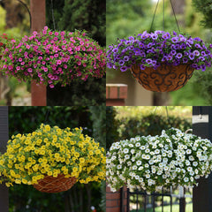 Calibrachoa KaBloom™ Collection