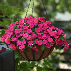 Impatiens Beacon Rose