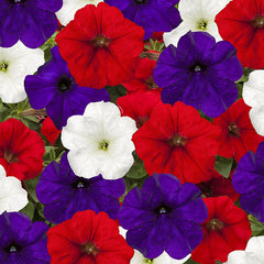 Petunia FotoFinish Patriot Mix