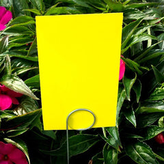 "Yellow 3"" x 5"" Sticky Traps"