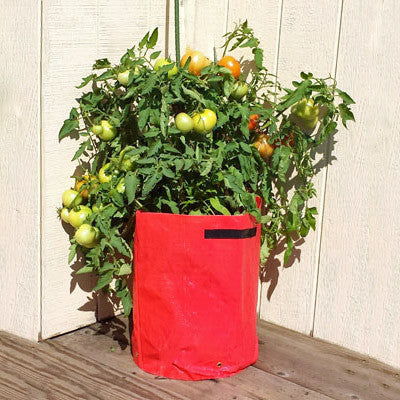 Tomato Patio Planters 3 Pack