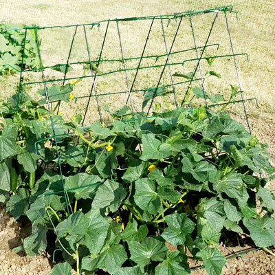 Cucumber Support Trellis