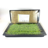 Puregrown Hemp Organic Micro Greens Kit