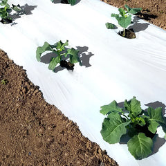 White on Black Plastic Mulch 4' x 3000' 1.5 mil.