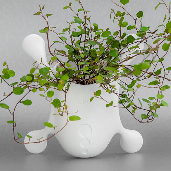 75d0adfd7c88 Livi Pot Jasmine – Harris Seeds