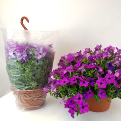 "12"" Hanging Basket Sleeves"