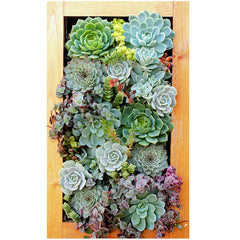 "SuperMoss Living Frame 14"" X 24"""