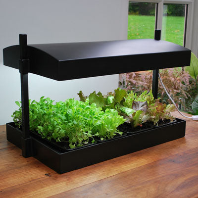 SunBlaster LED Grow Light Garden