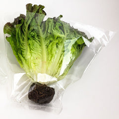 "Hydroponic Lettuce Sleeves 16"" x 11"" x 5"""