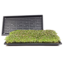 Microgreen Growing Trays  (No Drainage)