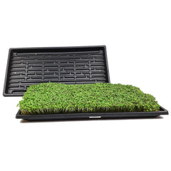 Microgreen Growing Trays