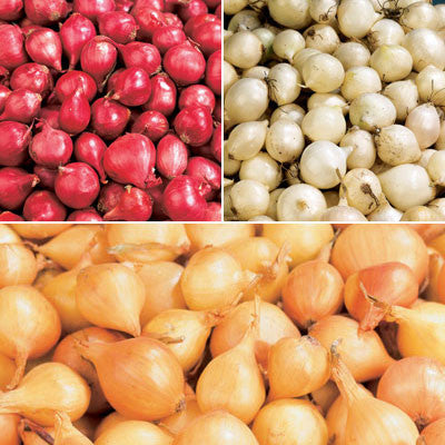 Onion Set Collection -