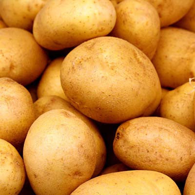 Potato Yukon Gold