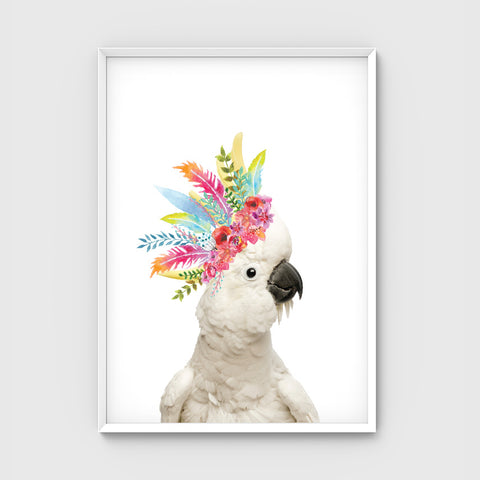 //BOHO COCKATOO//