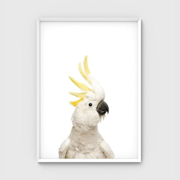 //COCKATOO FRIEND//