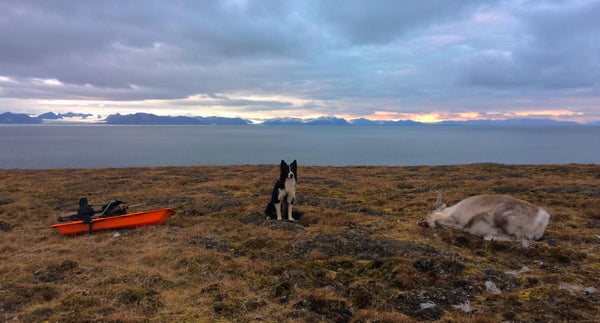 hunting reindeer food svalbard